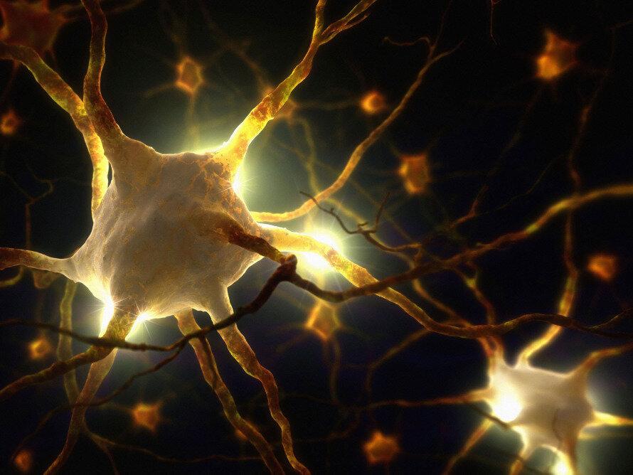 ➡️Des scientifiques découvrent des biophotons dans le cerveau
