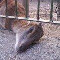 zoo shanghai 062