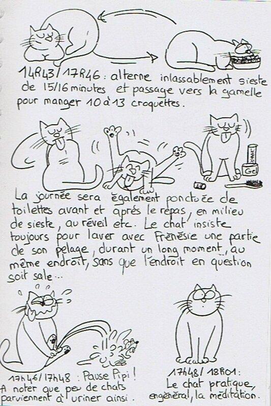 étude du chat3