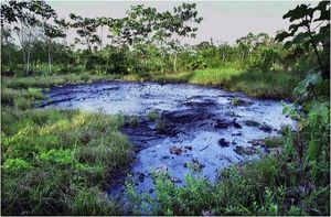 frenteAmazonia3