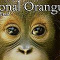 Aujourd'hui 19 août, journée mondiale des orangs-outans