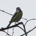 Photos d'oiseaux 2012