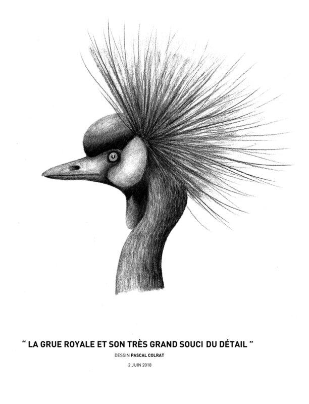 __la_grue_royale_et_son_tre_s_grand_soucis_du_de_tail__