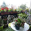 513- quelques fleurs
