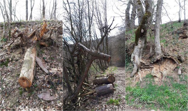 arbres morts-horz 1