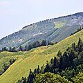 Un jour en forêt d'Arette en Barétous, le 27 juillet 2013...