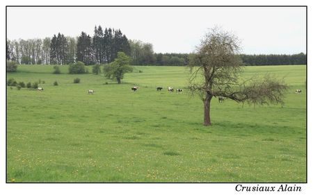 we_copains_tigeonville_grand_halleux_2012_05_12__13