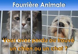 fourriere animale