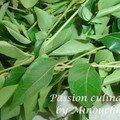 Raconte moi une épice # 15 : les feuilles de curry