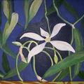 Orchidée vanille