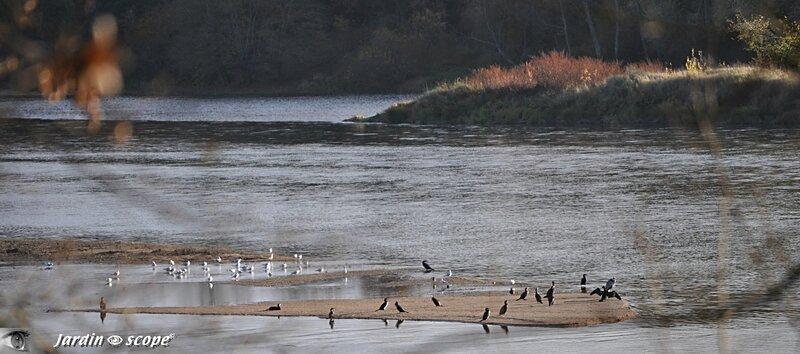 Le Loiret en automne
