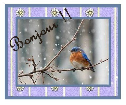 winter-bird_1