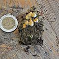 Crucibulum laeve (3)