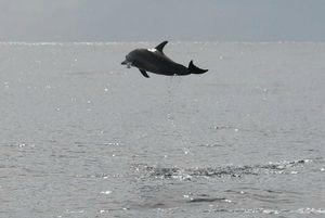 Dauphins (3)