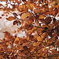 L'automne '20 de danièle29, 1ère inscrite