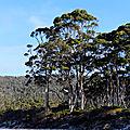 Tasman peninsula17