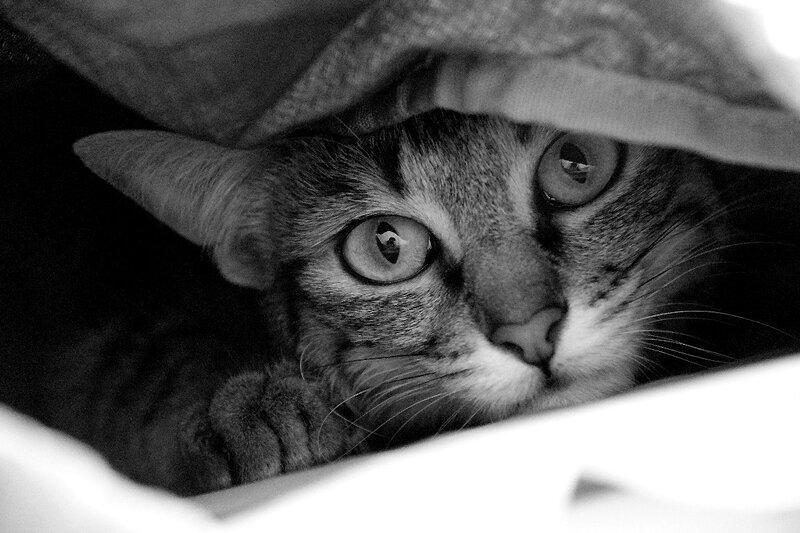 8-Happy cat_4648