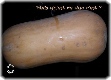 Courge butternut 1