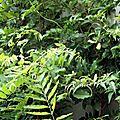 04-du vert sur ma terrasse