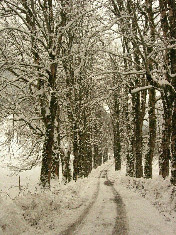 La Chartreuse sous la neige (hiver 2008)