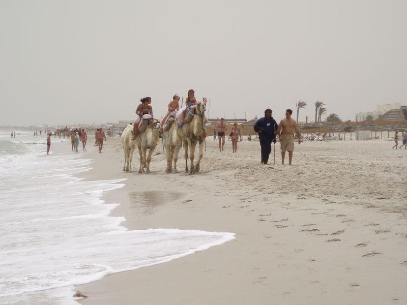 Promenade en chameau sur la plage de Sidi Mahrez
