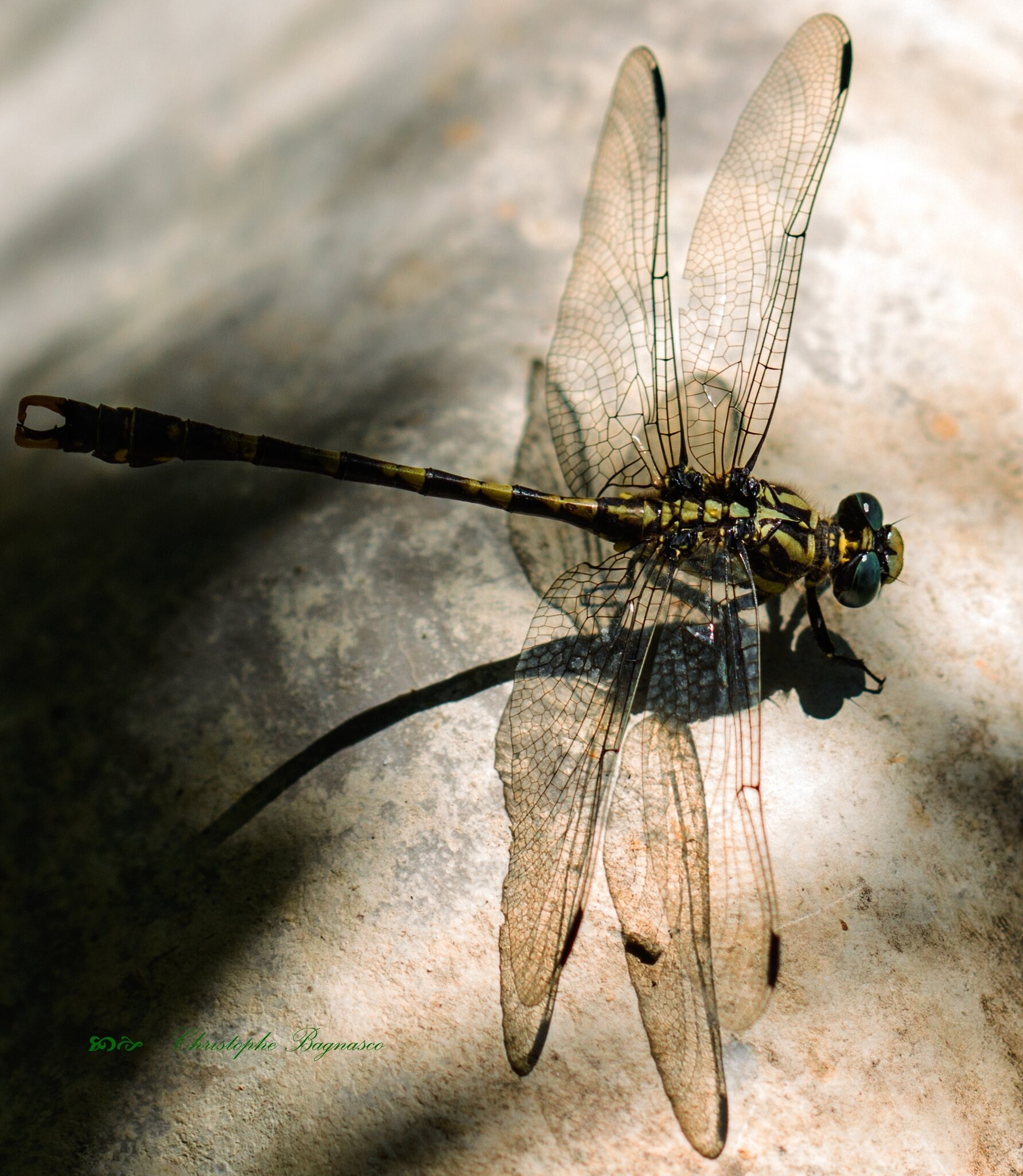 Hélicoptère fossile