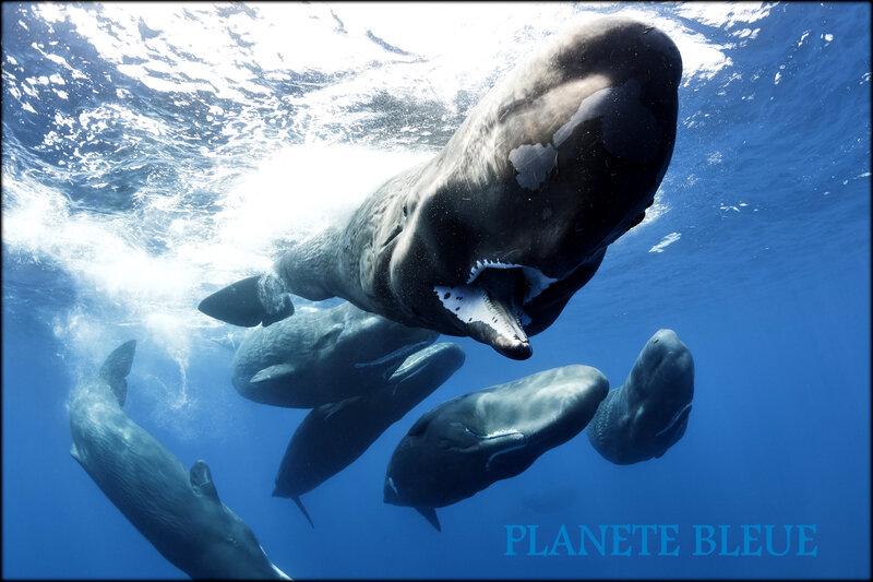 planete_bleue_plongee_dans_magie_des_oceans_avec_cette_miniserie_sur_france_2