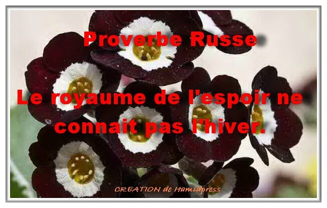 Proverbe Russe
