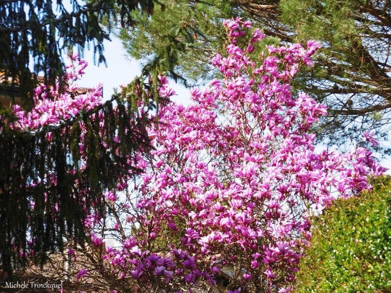 1-Fleurs de Léon et Orchidée rose 170319
