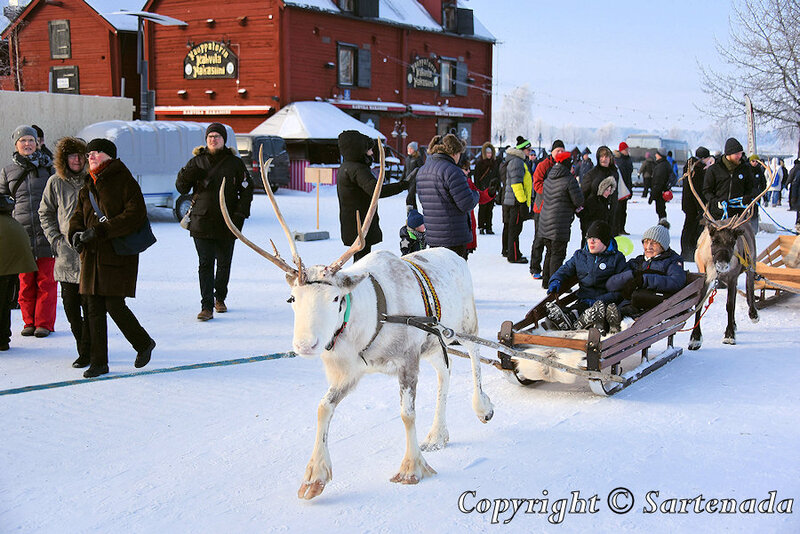 reindeer_rides_for_families_oulu_-13