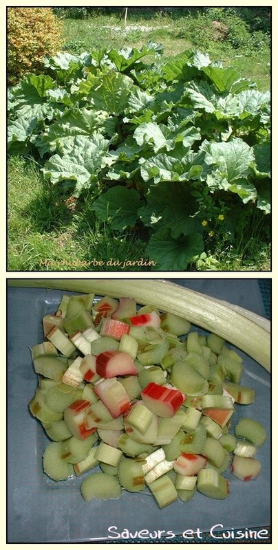 Rhubarbe du jardin