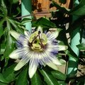 fleur passion 0449