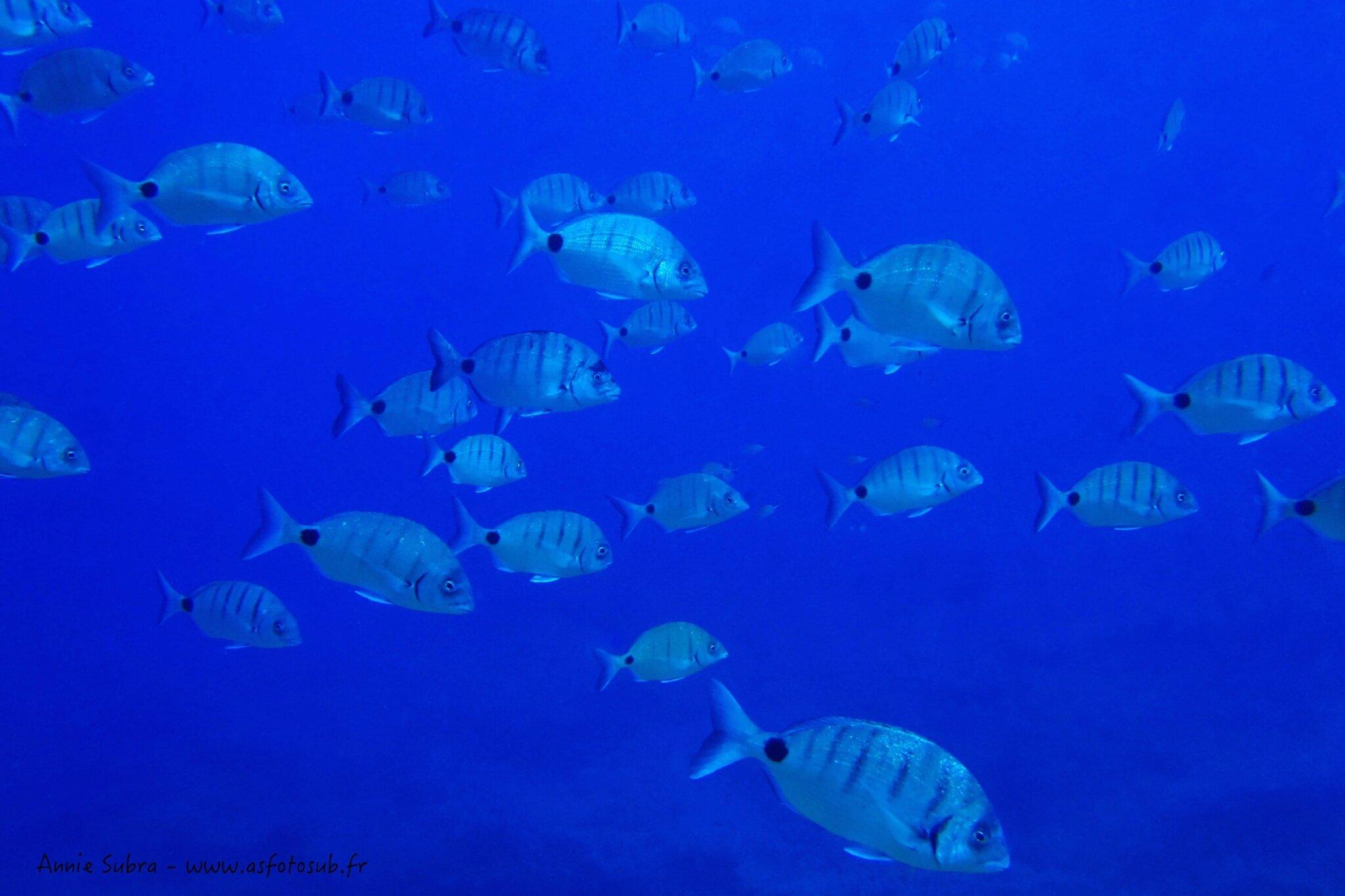 Banc de sars communs_13-07-2012