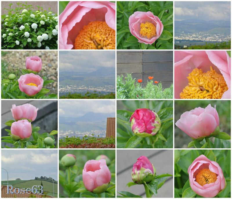 Faire le tour de mon jardin c'est comme écrire une poésie Rose63