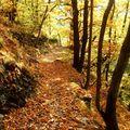 chemin de feuilles rousses