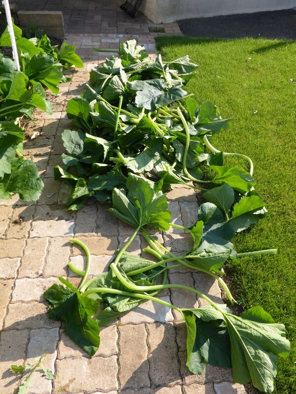 4-courgettes (5)