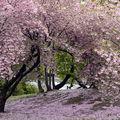 Un mercredi de printemps...