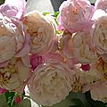 Partout il y a des roses
