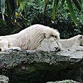 Une journée au zoo de la fléche