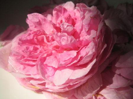 p_tales_de_rose_cristallis_s_016