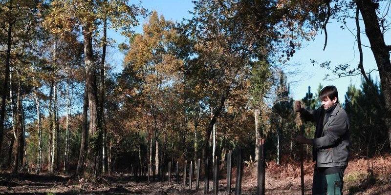 le bois de la région