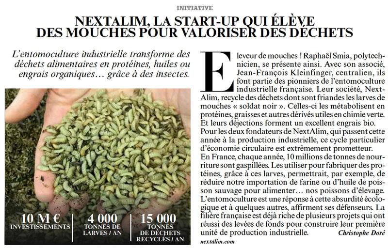 mouche- insecte biodiversité recyclage dechet environnementAvril_2018