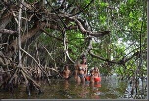 Mangrove, Chetumal