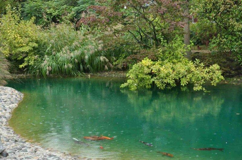 jardin japonais 0310028