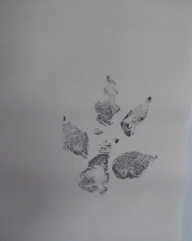trace loup