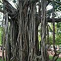 Sri_Lanka_196