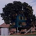enfouie dans un grand arbre yurtao