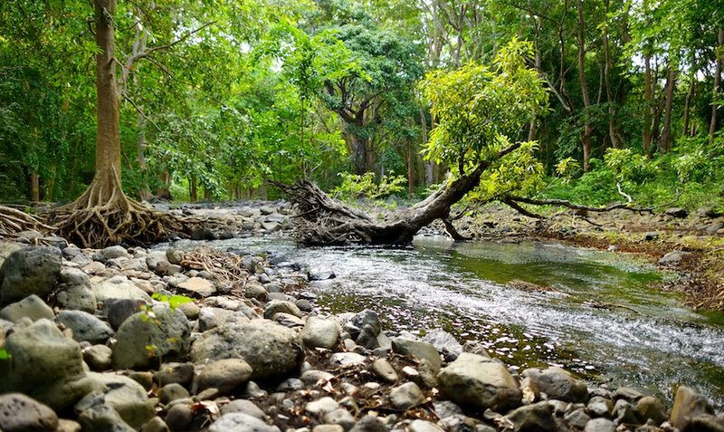 Bras-deau-forest