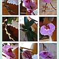 cadre_9_photos_orchidees