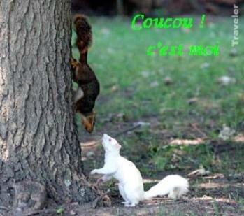 c écureuilsBPatFLy